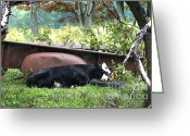 Antique Truck Greeting Cards - Tired Cow Greeting Card by Benanne Stiens