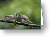 Titmouse Greeting Cards - Titmouse Feeding Time Greeting Card by Wingsdomain Art and Photography