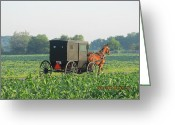 Amish Farms Greeting Cards - To market early Saturday Greeting Card by Tina M Wenger