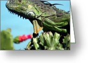 Iguana Greeting Cards - To the Point Greeting Card by Karen Wiles