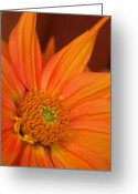 Orange Prints Greeting Cards - To the Point Greeting Card by Kathy Yates