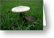 Wildlife Photos Greeting Cards - TOAD n STOOL Greeting Card by Skip Willits