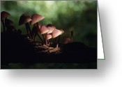 Toadstools Greeting Cards - Toadstools Greeting Card by David Aubrey