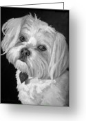 People Portraits Greeting Cards - Toby Greeting Card by Enzie Shahmiri