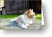 Old Mill Of Guilford Greeting Cards - Toby Old Mill Cat Greeting Card by Sandi OReilly
