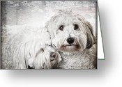 Mammal Photo Greeting Cards - Together Greeting Card by Elena Elisseeva