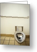 Disability Greeting Cards - Toilet in a Public Restroom Greeting Card by Thom Gourley/Flatbread Images, LLC