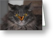 Whiskers Photo Greeting Cards - Tolerance Greeting Card by Shane Bechler