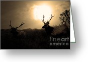 Black Elk Greeting Cards - Tomales Bay California Tule Elks At Sunrise . Golden . 7D4402 Greeting Card by Wingsdomain Art and Photography