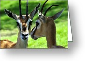 Horns Greeting Cards - Tommy Talk Greeting Card by David Lee Thompson