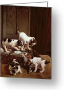Playful Pups Greeting Cards - Tomorrow will be Friday Greeting Card by John Hayes