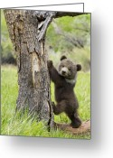 Teddy Bear Greeting Cards - Too cute for words Greeting Card by Melody and Michael Watson