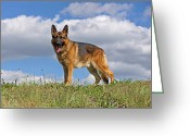 Alsatian Greeting Cards - Top of the Hill Greeting Card by Sandy Keeton