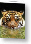 Big Cat Art Prints Greeting Cards - Torrent Greeting Card by Bill Fleming