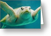  Ocean Greeting Cards - Tortuga Sonrisa Greeting Card by Skip Hunt