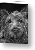 Pets Greeting Cards - Tosha the Highland Terrier Greeting Card by Enzie Shahmiri