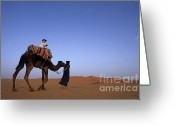 Looking At Camera Greeting Cards - Touareg man leading boy riding camel in Sahara Desert Greeting Card by Sami Sarkis