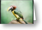 Exotic Bird Greeting Cards - Toucan Greeting Card by Gary Heller