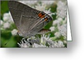 Designer Butterfly Works Photo Greeting Cards - Touch Of Color Greeting Card by Debra     Vatalaro