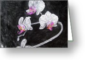 Moth Orchids Greeting Cards - Touch of Pink Greeting Card by Diana Shively