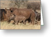 Cute Rhinoceros Greeting Cards - Tough Love Greeting Card by Michelle Heard