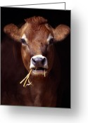Domestic Animal Photo Greeting Cards - Toupee Greeting Card by Skip Willits