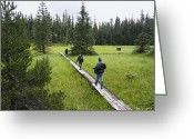 U.s. National Forest Greeting Cards - Tourists Walking On Boardwalk Greeting Card by Konrad Wothe