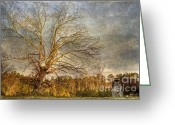 Huge Greeting Cards - Towering Oak Barn Greeting Card by Benanne Stiens