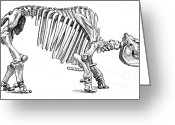 Most Greeting Cards - Toxodon, Cenozoic Mammal Greeting Card by Science Source