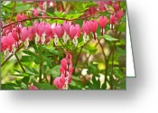 Bold Blossom Greeting Cards - Trail Of Bleeding Hearts Greeting Card by Debra     Vatalaro