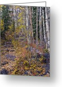 Brian Kerls Greeting Cards - Trail of Leaves Greeting Card by Brian Kerls