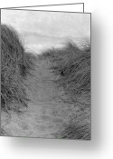 Dune Grass Greeting Cards - Trail Through The Sand Dunes Greeting Card by Daniel J. Grenier