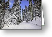 Snowy Greeting Cards - Trail through trees Greeting Card by Garry Gay