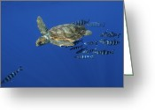 Sea Turtles Greeting Cards - Trailed By Pilotfish, A Young Greeting Card by 