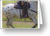 Dressage Digital Art Greeting Cards - Training Greeting Card by East Coast Barrier Islands Betsy A Cutler
