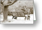 Benches Photo Greeting Cards - Tranquility Greeting Card by Frank Tschakert