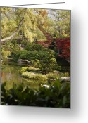 Maple Photographs Greeting Cards - Tranquility Greeting Card by Greg Kopriva