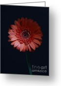 Transcend Greeting Cards - Transcend the Ordinary Greeting Card by Inspired Nature Photography By Shelley Myke