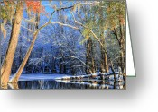 Cypress Tree Greeting Cards - Transitions  Greeting Card by JC Findley