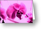 Essence Greeting Cards - Translucent Purple Petals Greeting Card by Mike Grubb