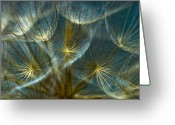 Abstract Nature Greeting Cards - Translucid Dandelions Greeting Card by Iris Greenwell