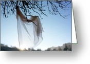 Bare Tree Greeting Cards - Transparent fabric Greeting Card by Bernard Jaubert
