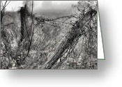 Barbed Wire Fences Photo Greeting Cards - Trapped Greeting Card by JC Findley
