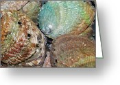 Abalone Seashell Greeting Cards - Treasures VII Greeting Card by Christine  Fifer