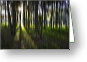 Tree Lines Greeting Cards - Tree abstract Greeting Card by Sheila Smart