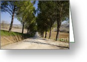 Tree Allee Greeting Cards - Tree allee Greeting Card by Mats Silvan