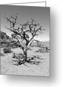 Gallery Print Greeting Cards - Tree at Cedar Ridge BW Greeting Card by Julie Niemela