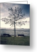 Benches Photo Greeting Cards - tree at lake Constance Greeting Card by Joana Kruse