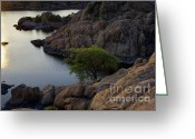 Watson Lake Greeting Cards - Tree at Sunset at the Granite Dells Arizona Greeting Card by Dave Dilli