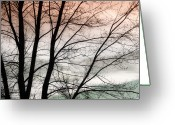 Sunset Posters Greeting Cards - Tree Branches  Greeting Card by James Bo Insogna